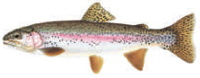 Rainbow Trout Donor Level: Art used with permission of Joseph Tomelleri.
