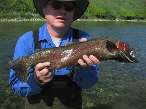 Ken Eis with another trout