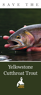 Save the Yellowstone Cutthroat Trout