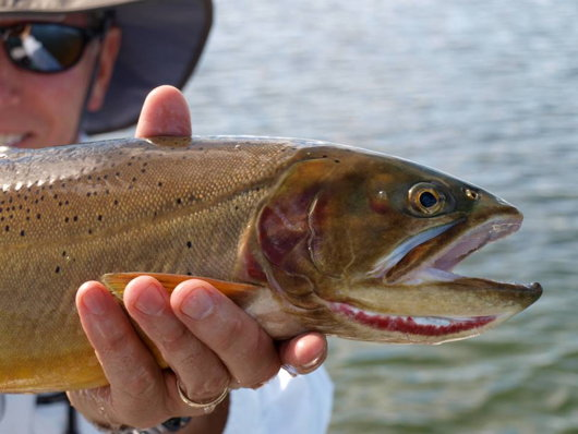 Gelatt Snake River Cutthroat