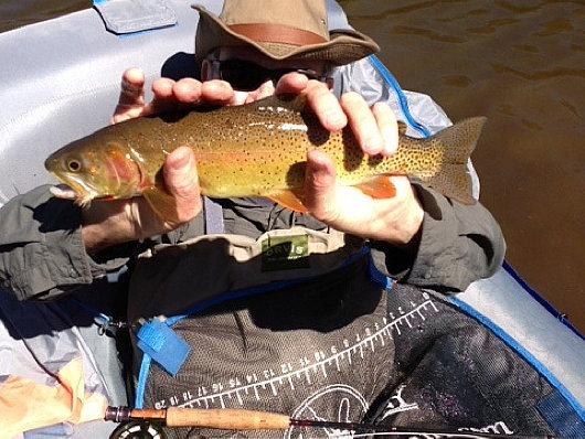 Bob Green shows off a Joe Wright Reservoir trout.